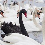 """В поисках """"черного лебедя"""": откуда придет новый финансовый кризис // РИА Новости"""