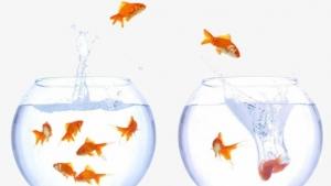 ПИФы теряют массу - Банки-агенты переключают клиентов на другие инвестиционные инструменты